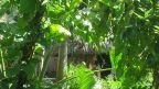 Cogi-Hütte