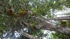 Seltsame Früchte im Dschungel