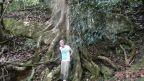 Wurzel eines 1000 Jahre alten Baumes