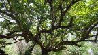 Krasser Baum