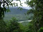 Dschungel und Fluss