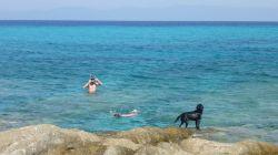 Schnorcheln mit Hund
