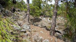 Vorbei an Pinien und Felsen