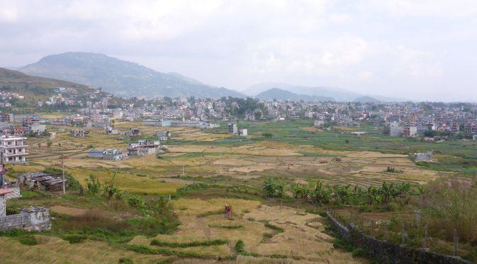 Reisfelder in Pokhara