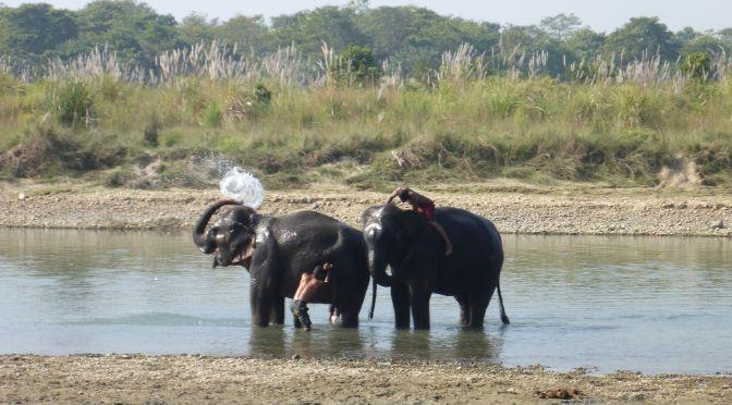 Elefanten-Waschung