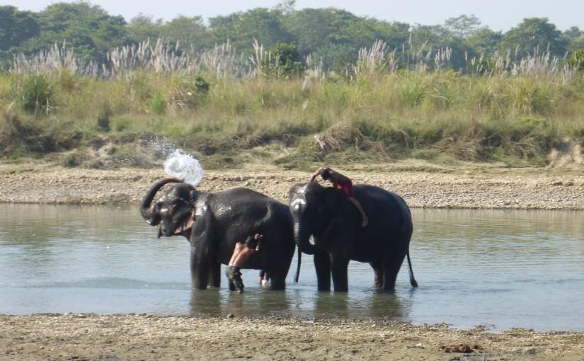 Chitwan Nationalpark – Mitten im Dschungel
