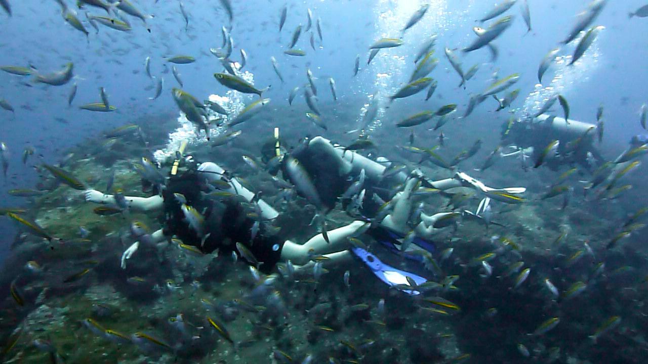 Tauchen auf Ko Tao zwischen hunderten Fischen
