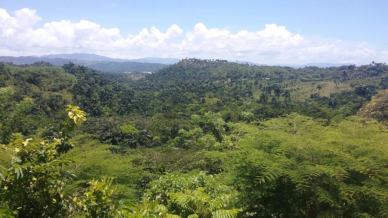 Palmen auf grünen Hügeln